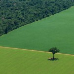 Forests in Brazil have been cut down to make way for crops such as soya. Credit: Rodrigo Baleia/Greenpeace