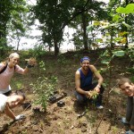 Interns planting shrubs on Reforestation Day at Wolfe's Pond Park in Staten Island
