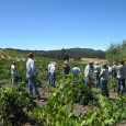 After 7 months of interning at Community Alliance with Family Farmers (CAFF) in California, I have worked to organize and facilitate two dry-farming workshops, helped create a dry-farming program complete […]