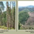 I work for the North Coast State Forest Coalition, out of the Oregon Chapter Sierra Club Office in Portland, Oregon In 2011, the Oregon Department of Forestry revised the State […]