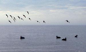 ducks-landing