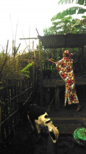 Mbororo woman caring for goats from the income generating project discussed herein