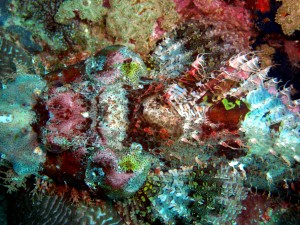 Vibrant coral from a healthy section of the reef in Sebaste Shoal taken earlier this year in April.
