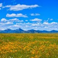 Big Sky Country. What runs through your mind when you read those three words? A never-ending canopy of blue skies, perhaps? The wide open spaces of ranch land, home to […]