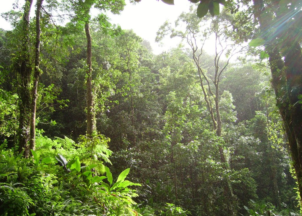 10 evidenced-based priorities to end tropical deforestation: Bard CEP alum Alan Kroeger's work for TFA 2020