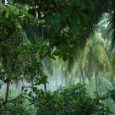 Tropical forests have a lot to offer: the richest concentration of biodiversity on the planet, a home for indigenous peoples, and the plants that are used to create many modern […]