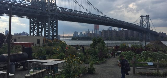 Since my last post, my internship has moved from the Manhattan Borough President's Office to Agritecture. Yes, you are reading that right. It's a play on agriculture and architecture. Agritecture […]
