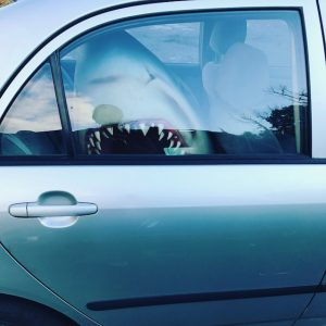A plaster shark head looms out of a fellow intern's car window.