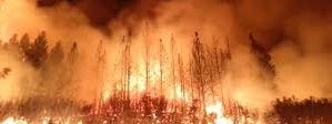 American forests are at risk. Wildfires are becoming more frequent, fire season is lasting later into the year,and fires are burning for longer. And the costs of these fires continues […]